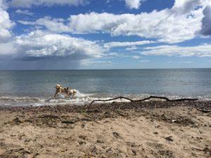 Summer 2016 Stonehaven Beach